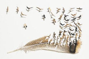 """Chris Maynard, """"Where feather come from"""" (turkey feather)"""